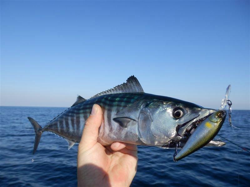 Рыбацкое море крым